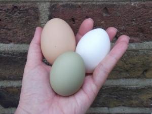 Green Eggs 005