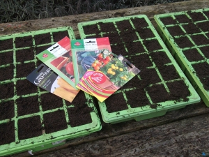 Sowing the Solanaceae
