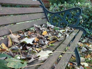 Leaves on bench