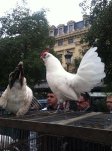 Paris Poultry