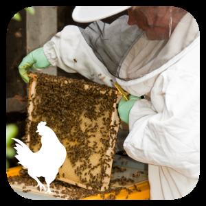 Full day beekeeping